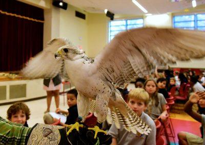 Falcon visits Latin